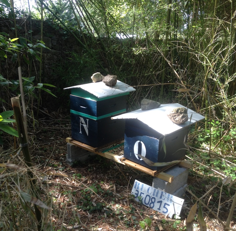 Les ruches pour nos abeilles à la Haute Flourie à Saint-Servan, Saint-Malo